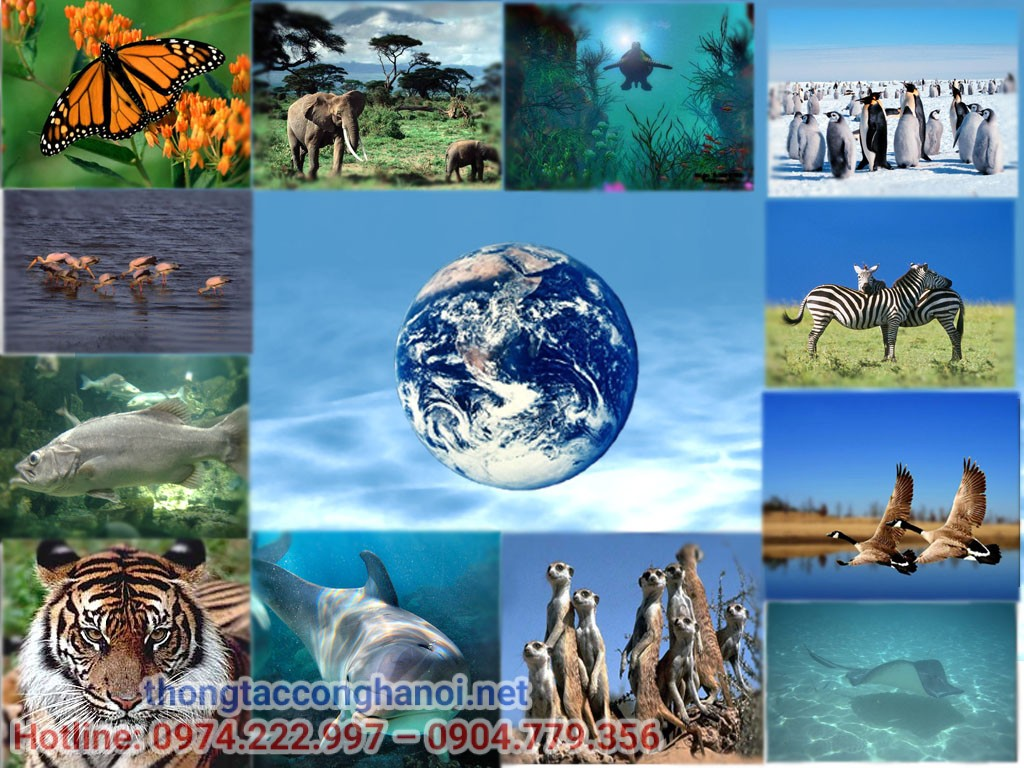 đa dạng sinh học