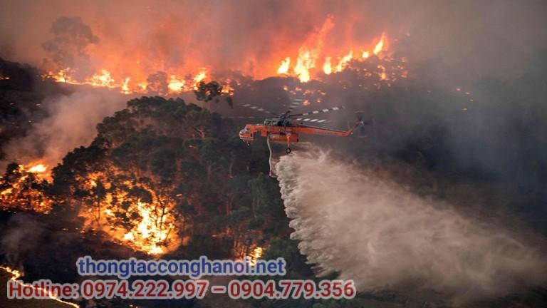 cháy rừng gây ô nhiễm môi trường
